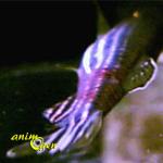 Mauvaise odeur de l'eau et taches noires sur le sable dans un aquarium d'eau douce (causes, solutions)