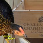 """Une idée """"récup"""" pour un nid de poule fait maison (tutoriel, test, avis, prix)"""