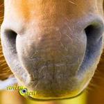 Les outils de perception chez les chevaux