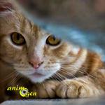 Votre chat est stressé : comment réagir ?