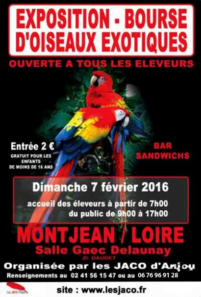 Exposition-Bourse d'oiseaux exotiques à Montjean sur Loire (49), le dimanche 07 février 2016