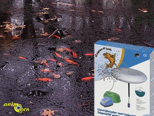 Bassin faut il nourrir les poissons en hiver animogen for Alimentation poisson rouge bassin