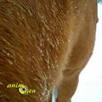 Tondre son cheval en hiver (utilité)