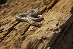 Les serpents, guerriers aux multiples facettes dans l'Antiquité...