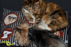 Accessoire : un coussin pour chiens et chats imperméable et économique à fabriquer soi-même