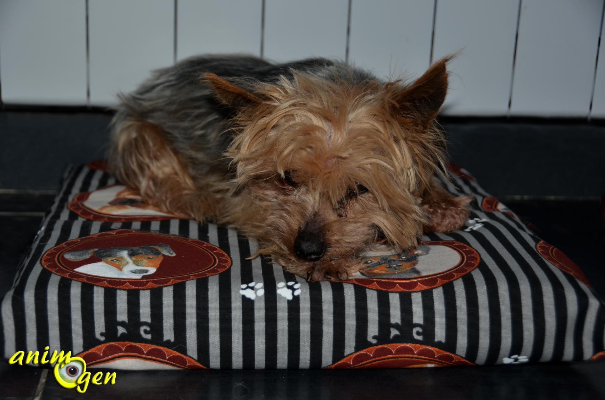 accessoire   un coussin pour chiens et chats imperm u00e9able et  u00e9conomique  u00e0 fabriquer soi