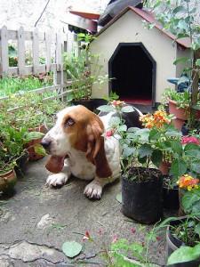 Votre chien ne veut pas entrer dans sa niche : pourquoi, et comment y remédier ?