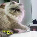 Comportement : pourquoi les chats donnent-ils des coups de patte aux objets qui les entourent ?
