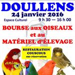 Bourse aux oiseaux à Doullens (80), le dimanche 24 janvier 2016