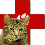 Santé : la démence féline (causes, symptômes et soins palliatifs)