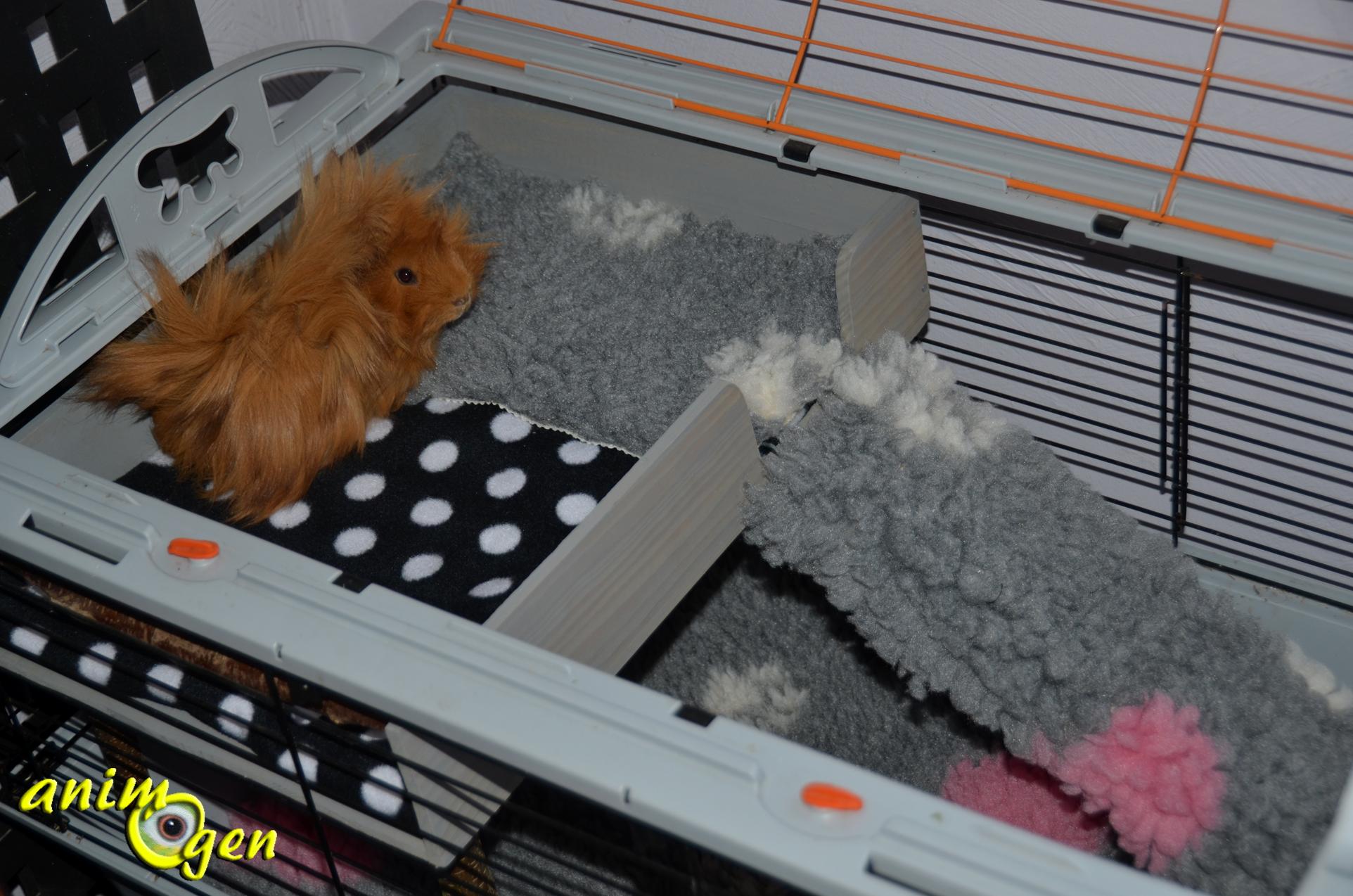 Une terrasse pour la cage de nos rongeurs et lapins fabrication tutoriel prix animogen - Fabriquer cage cochon d inde ...