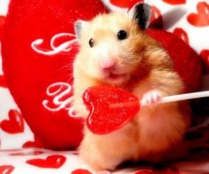 La Saint Valentin n'est pas faite pour les chiens, enfin, quoique...
