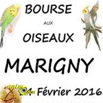 Bourse aux oiseaux à Marigny (50), le dimanche 14 février 2016