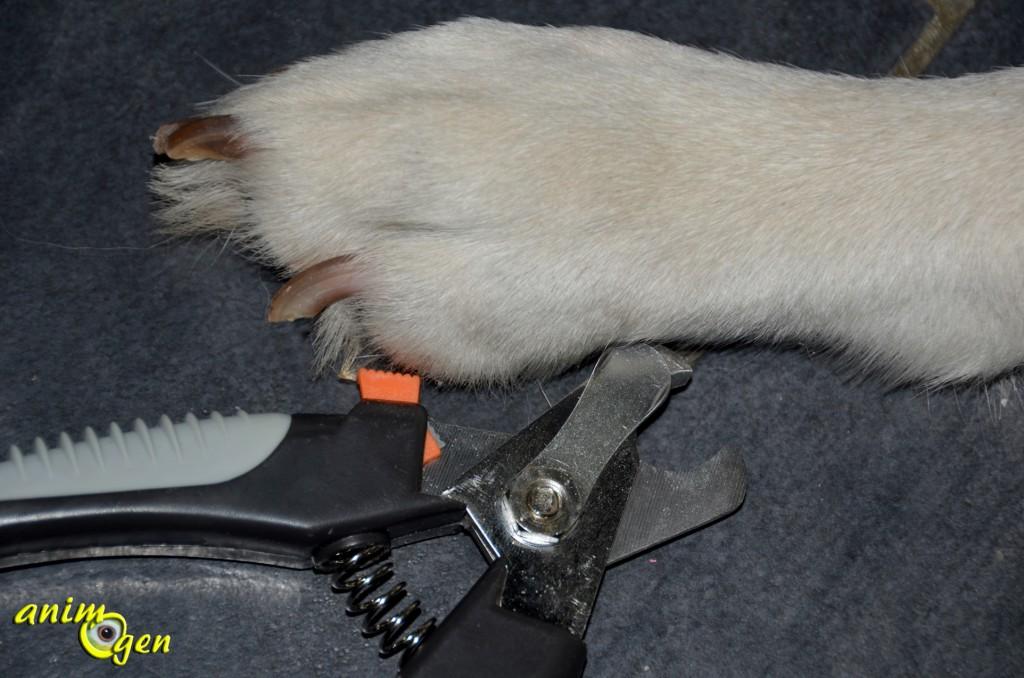Accessoire : coupe-ongles pour chien Trixie (test, avis, prix)