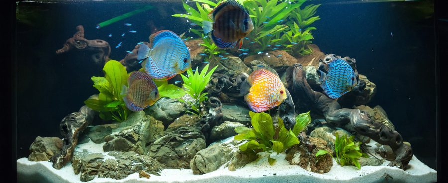 La filtration biologique dans un aquarium d'eau eau douce (fonction, utilité)