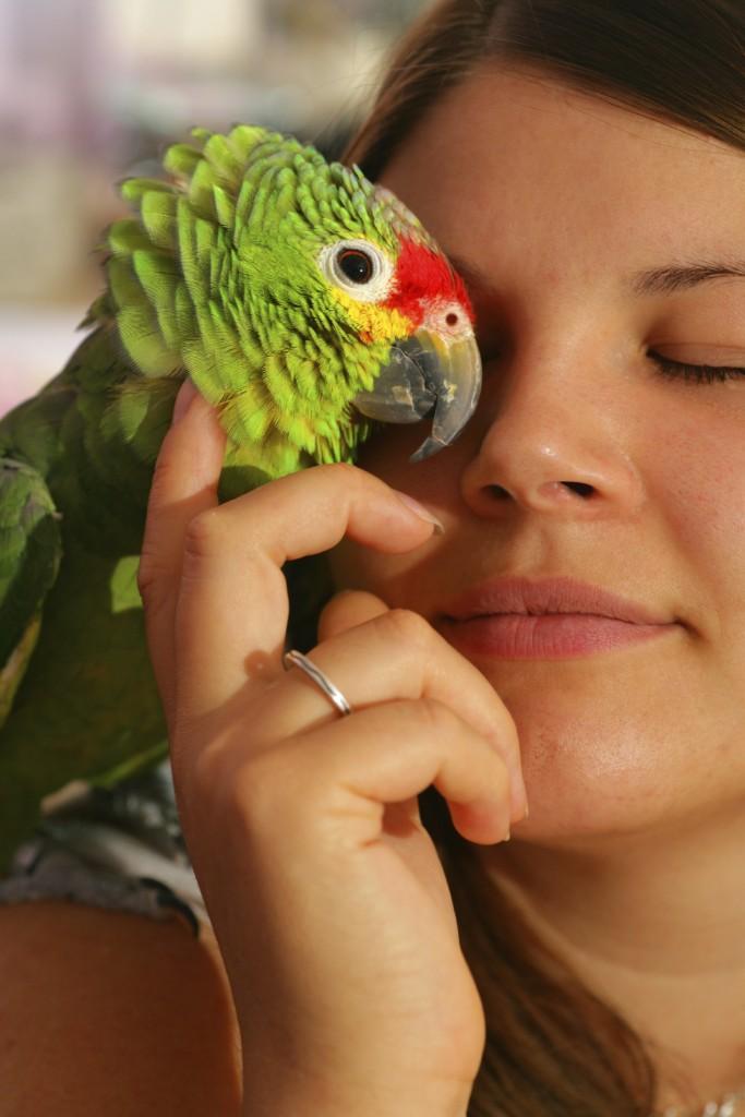 Education et comportement : mon perroquet parlera-t-il ?