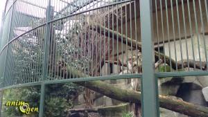 ménagerie du jardin des plantes animaux