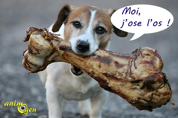 Alimentation et santé : peut-on donner des os à notre chien ?