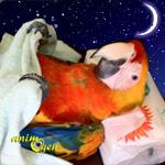 Une cage de nuit pour nos perroquets (objectifs, avantages, inconvénients)