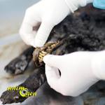 La Sibérie conserve, un chien de 12400 ans y a été découvert