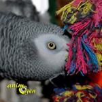 Comportement : ennui et négligence et conséquences chez le perroquet