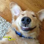 Comportement : les chiens rêvent-ils ?