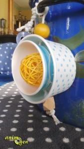 Le gobelet à glace en carton, une gourmandise quatre saisons pour nos perroquets