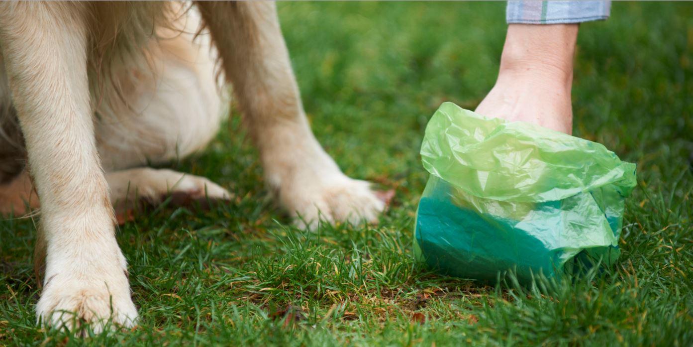 Béziers déclare la guerre aux crottes avec le fichage ADN des chiens