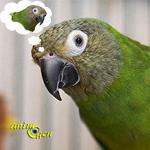 Adopter un nouvel ami pour un perroquet est-il judicieux ?