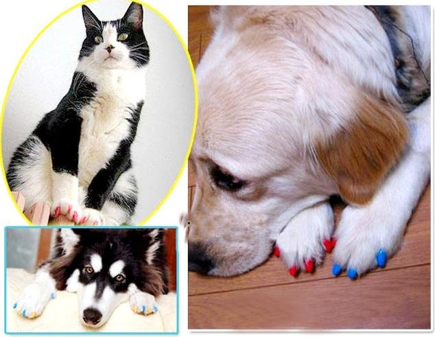 Accessoire : les faux ongles pour chats (Soft Claws)