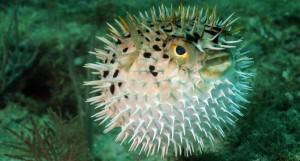 Les effets du stress sur les poissons vivant en aquarium