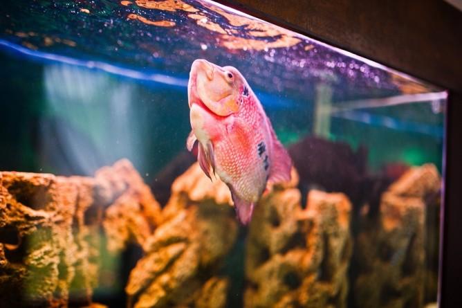 poissons morts aquarium