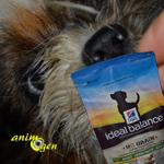 Alimentation : croquettes pour chien Hill's Ideal Balance sans céréales (test, avis, prix)