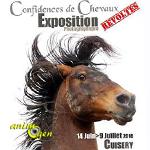 """Exposition photographique """"Confidences de chevaux révoltés"""" à Cuisery (71), du mardi 14 juin au samedi 09 juillet 2016"""
