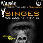 """Exposition """"Singes, nos cousins primates"""" à Châteaudun (28), du 14 mai 2016 au 02 janvier 2017"""