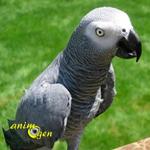 Santé : les problèmes respiratoires chez les perroquets (causes, diagnostic, traitements)