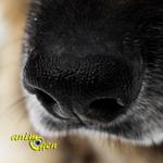 Stimulez l'odorat de votre chien par le jeu