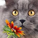 Santé : les allergies aux pollens chez le chat (causes, symptômes, traitements)