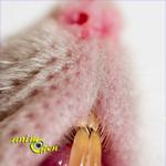 Pourquoi certains rats mordent-ils ? (causes et solutions)
