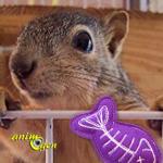 Quels jouets choisir pour un écureuil ?