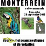 Bourse d'oiseaux exotiques et de volailles à Monterrein (56), le dimanche 25 septembre 2016