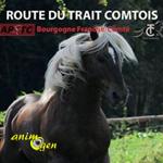 Route du cheval de trait comtois à Marault (58), du vendredi 26 au dimanche 28 août 2016