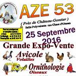 Grande expo-vente de volailles, oiseaux, reptiles à Azé (53), le dimanche 25 septembre 2016
