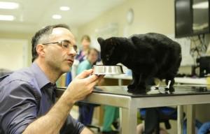 Greffe d'organes : le chat bionique