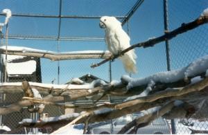 Quels températures et écarts nos perroquets peuvent-ils supporter en été comme en hiver ?