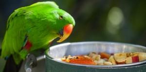 Alimentation : comment nourrir correctement nos perroquets ?
