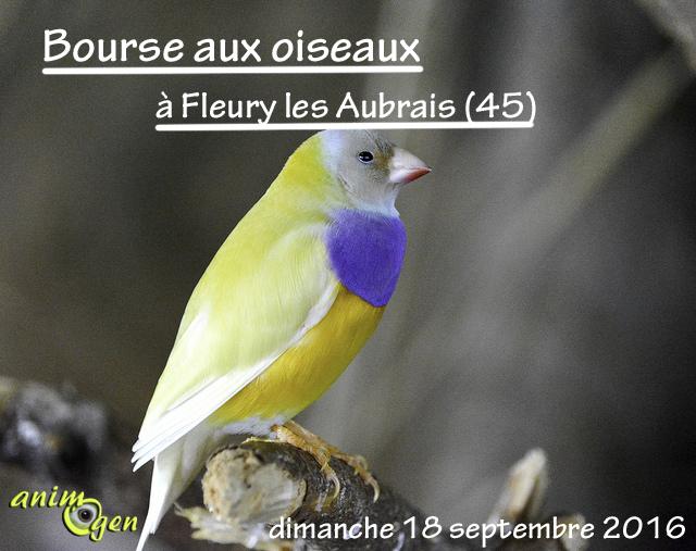 Bourse aux oiseaux à Fleury les Aubrais (45), le dimanche 18 septembre 2016