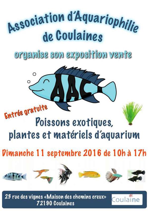 Bourse aux poissons coulaines 72 le dimanche 11 for Vente aquariophilie