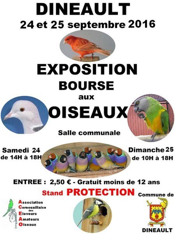 Exposition-Bourse aux oiseaux à Dinéault (29), du samedi 24 au dimanche 25 septembre 2016