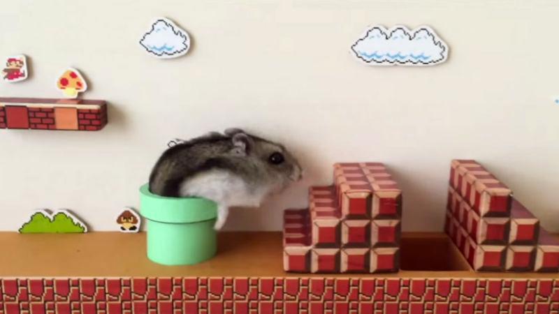 Un hamster héro de jeu vidéo dans Mario Super Bros
